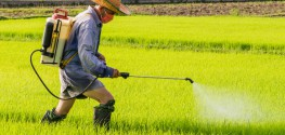Researcher: Scientists Have Warned for Years that Monsanto's Roundup Causes Cancer