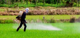 Conventional Food is Sprayed with Monsanto's Carcinogenic Chemicals Just 3 Days Before Harvest