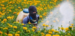 After Cancer Link Confirmed, EPA Still Doubles Herbicide Use