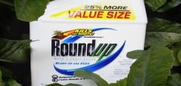 Were USDA Scientists Harassed for Questioning Roundup's Safety?