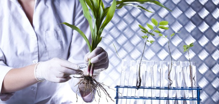 plants_testing_science_lab_735_350