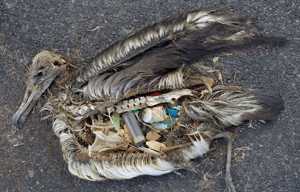 plastic_bird_pollution_scale