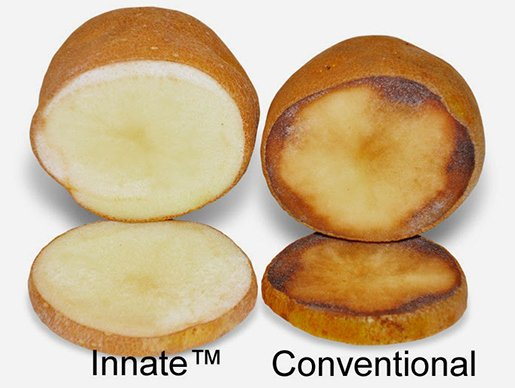 gmo potato compare