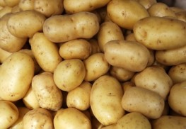 Genetically Modified Potatoes: Scientists Unleash New Monster