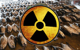 radiation tuna