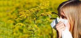 How to Stop Hay Fever This Fall - 13 Natural Tips