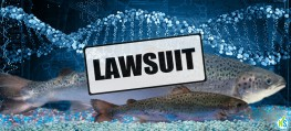 Groups File Lawsuit to Block FDA's Approval of GM Salmon