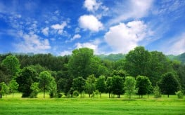 Green Leafy Environments Essential for Human Health