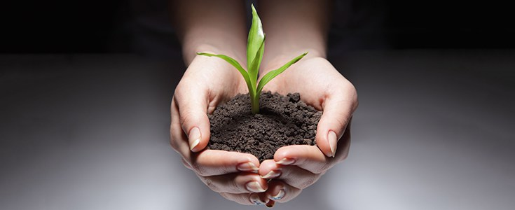 soil-dirt-farm-nature-plants-735-300