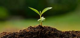 soil, plant