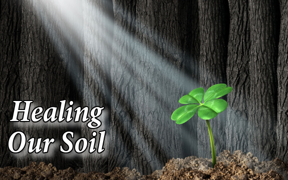 healing soil