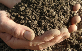 Admittedly Illegal Genetically Modified Soil Fungus Present in 'Organic' Products