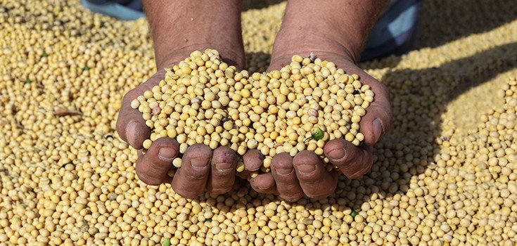 soy-beans-crops-735-350