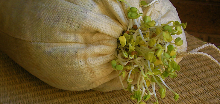 sprouts-bag-735-350-2