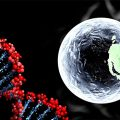DNA editing embryo