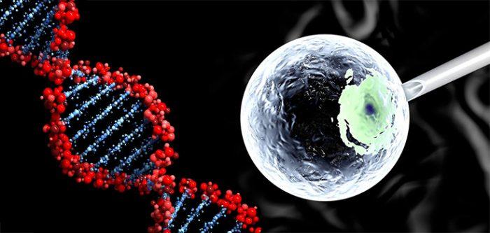 DNA editing embryo