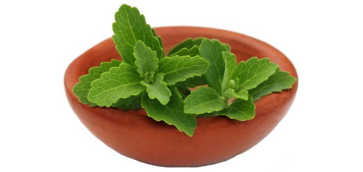 stevia_plant_herb_sugar_735_350-2