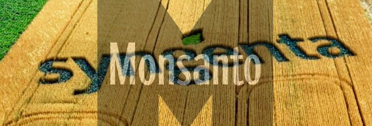 syngenta_field_monsanto_735_250