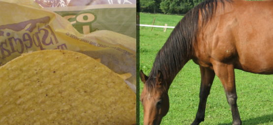 taco bell horsemeat