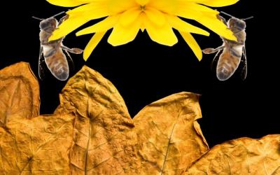 honeybee tobacco