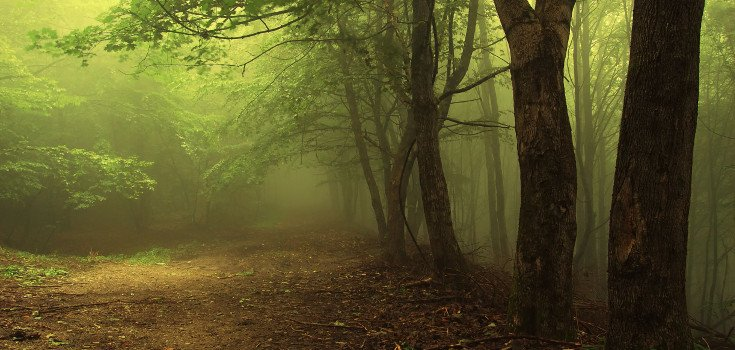trees_nature_forest_735_350