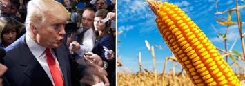 Donald Trump and GMOs