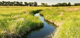 Waters at Risk? EPA Will Revoke the Clean Waters Act of 1972