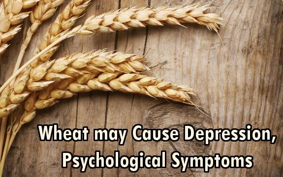 wheat dangers