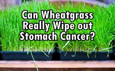 wheatgrass cancer