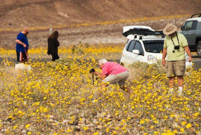 "California Desert ""Superbloom"" is Rare and Beautiful"