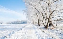 Eating in Season | 4 Winter Superfoods