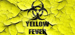 Could Yellow Fever be the U.S.'s Next Zika?