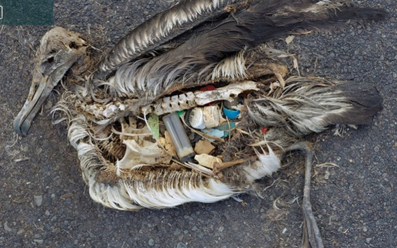 Fish Eat Plastic from Polluted Oceans, Travels up Food Chain & Harms Humans