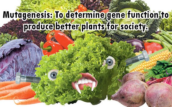Mutagenesis and Mutant Vegetables: More Dangerous than GMOs?