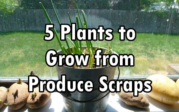 Grow a Garden from Garbage: 5 Plants to Grow from Food Scraps