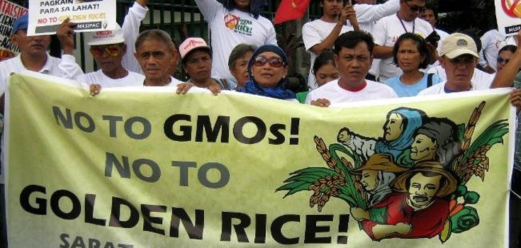 Farmers of the Philippines Say 'No Way' to GMO Rice