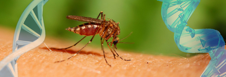 Scientists Unveil Genetically Modified Insects with 'Kill Switch' Genes