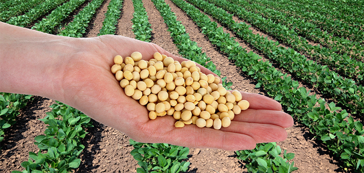 Which of Your Foods are Sprayed with Round Up Just 3 Days Before Harvest?