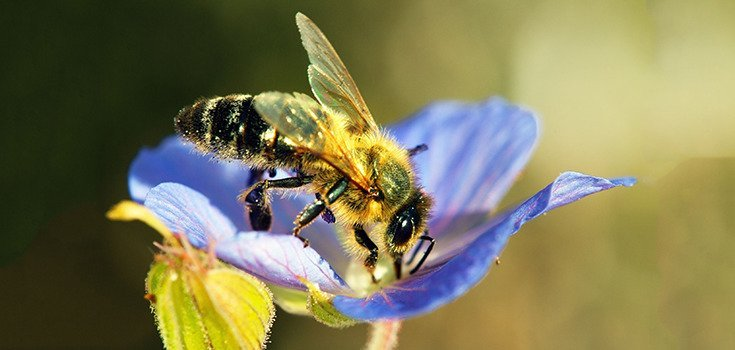 175,000 Ask Hardware Stores to Stop Selling Bee-Killing Pesticides