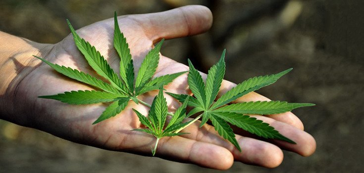 Marijuana Kills Cancer Cells, Admits the U.S. National Cancer Institute