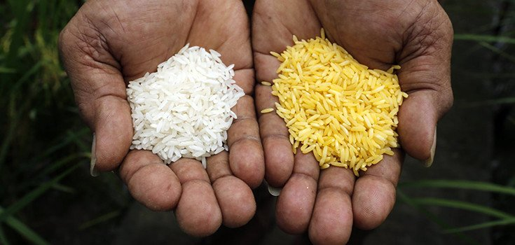 """""""Miracle"""" Golden Rice Could Cause Birth Defects, Warns Indian Scientist"""