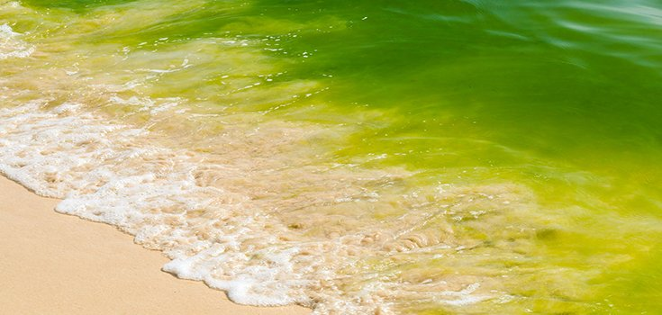 Could This Algae Bloom Toxin be a Cause of Alzheimer's, ALS?