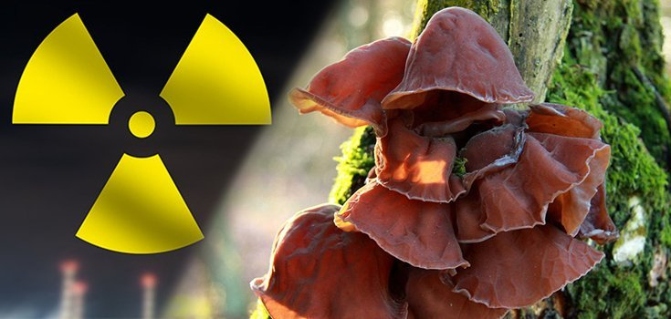 Could Consuming This Mushroom Protect Against Radiation?
