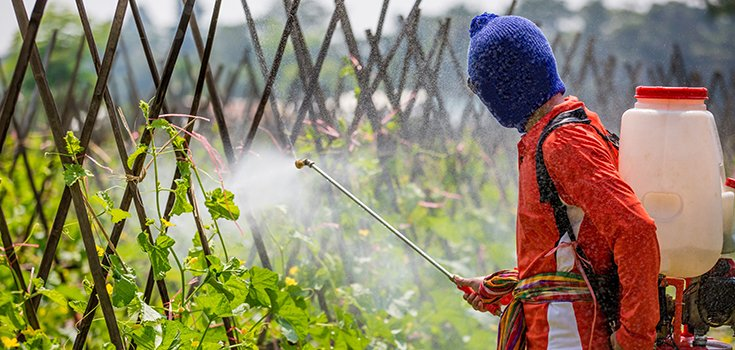 Glyphosate, Most Widely Used Weed Killer, Still Isn't Killing Weeds