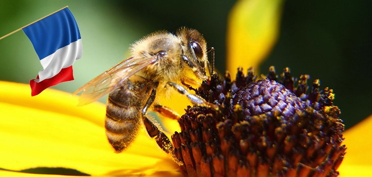 France Approves Plan to Ban Bee-Harming Neonicotinoid Pesticides