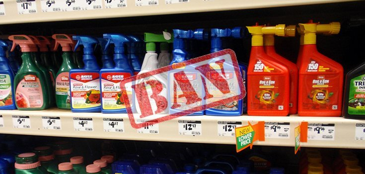 This State may Become the 1st to Ban the Sale of Bee-Killing Neonicotinoids