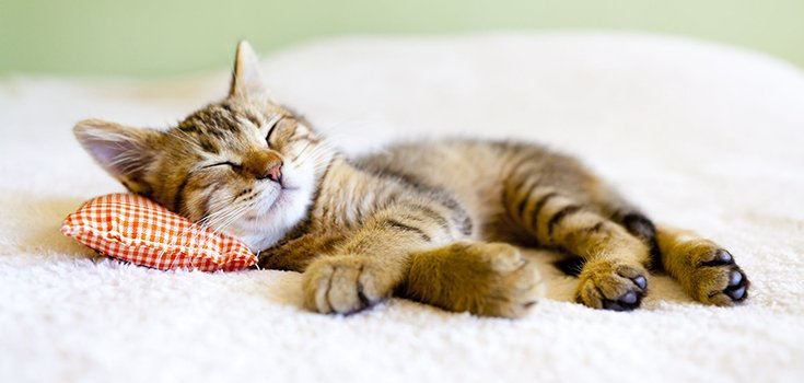 Surprising? Sleep is Essential for Making a Good Impression