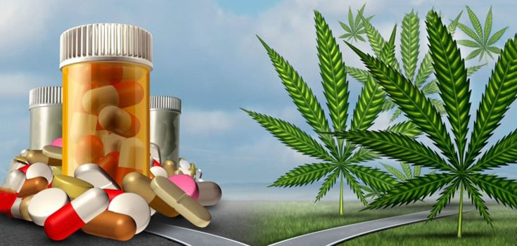 Survey: 42% of People Replaced Pharmaceuticals with Marijuana Compounds