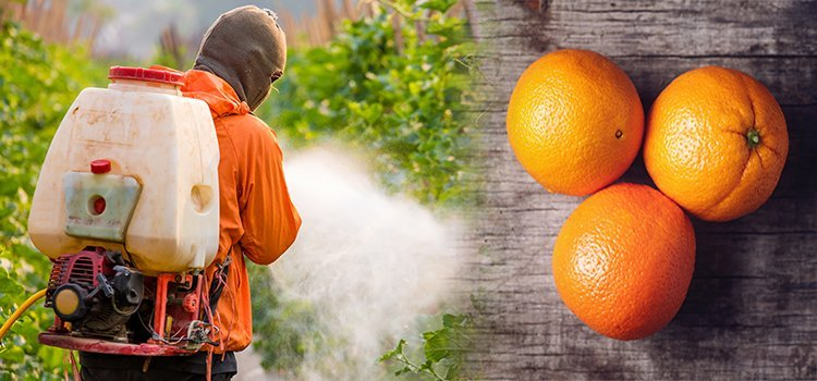 Advocacy Group Finds Glyphosate in 100% of Top-Selling Orange Juice