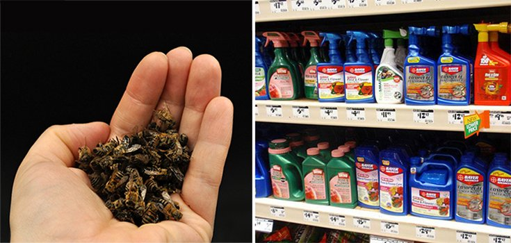 Kroger Vows to Phase out Sale of Bee-Killing Pesticides by 2020